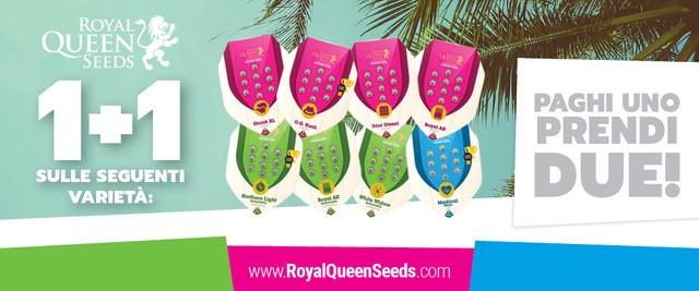 Royal Queen Seeds Femm.