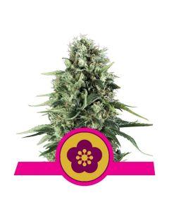 Power Flower femm