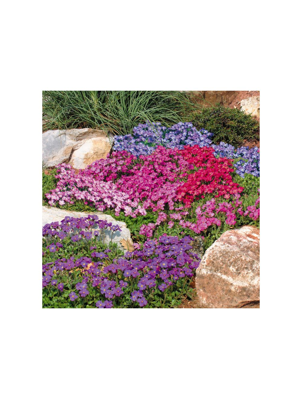 Fiori Da Giardino Roccioso fiori per giardini rocciosi