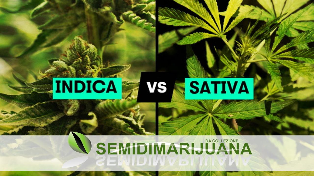 sativa vs indica guida